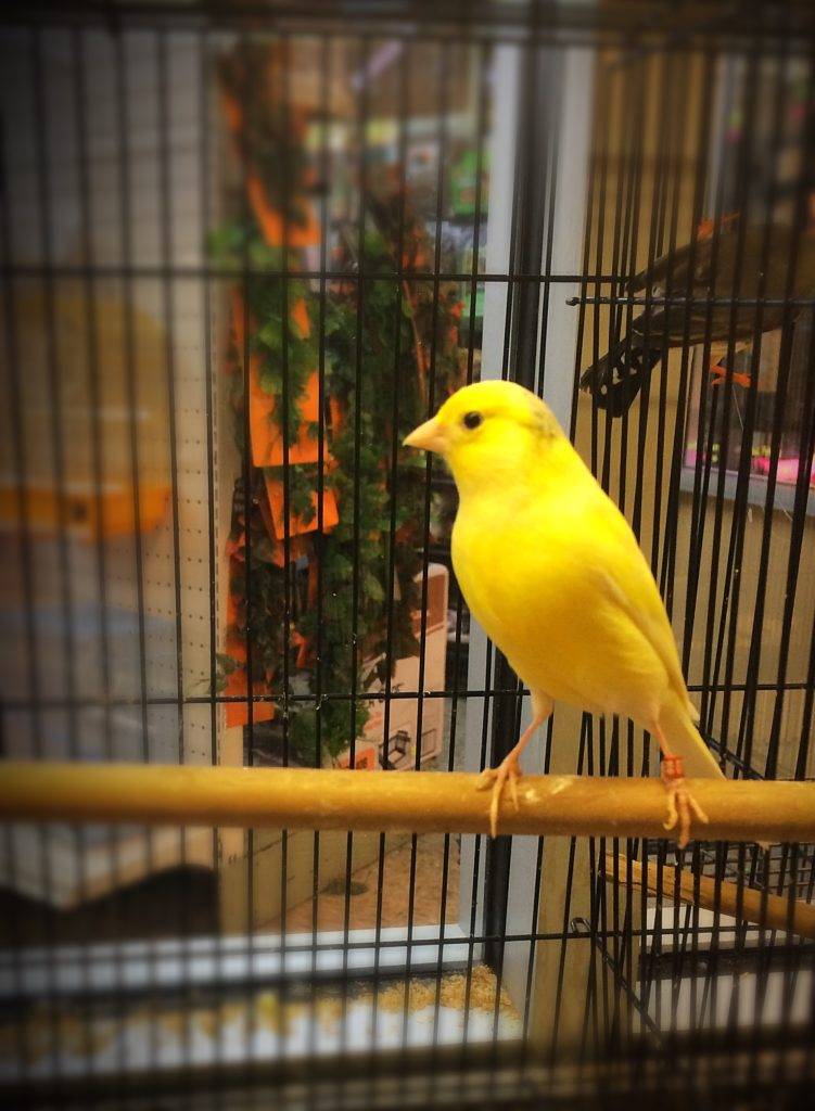Canary Southside Pet Shop