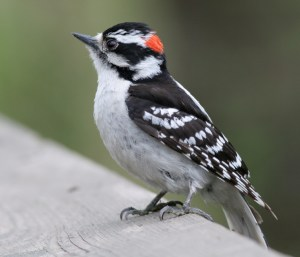 POWDERHORN BIRDWATCH: Living organisms continue peculiar habits