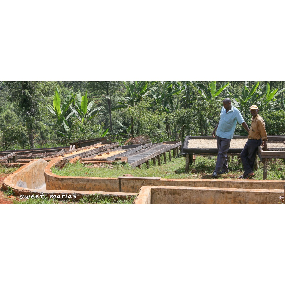 James Kariruki and one of his workers standing around washing station and raised beds of his plantation Fram Farm in Kiambu Kenya