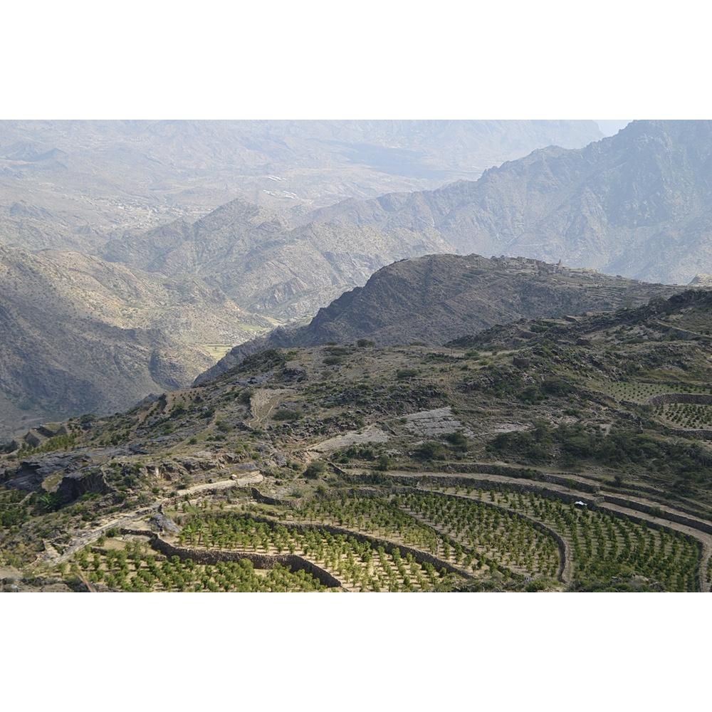 Photo of coffee farms in Yemen