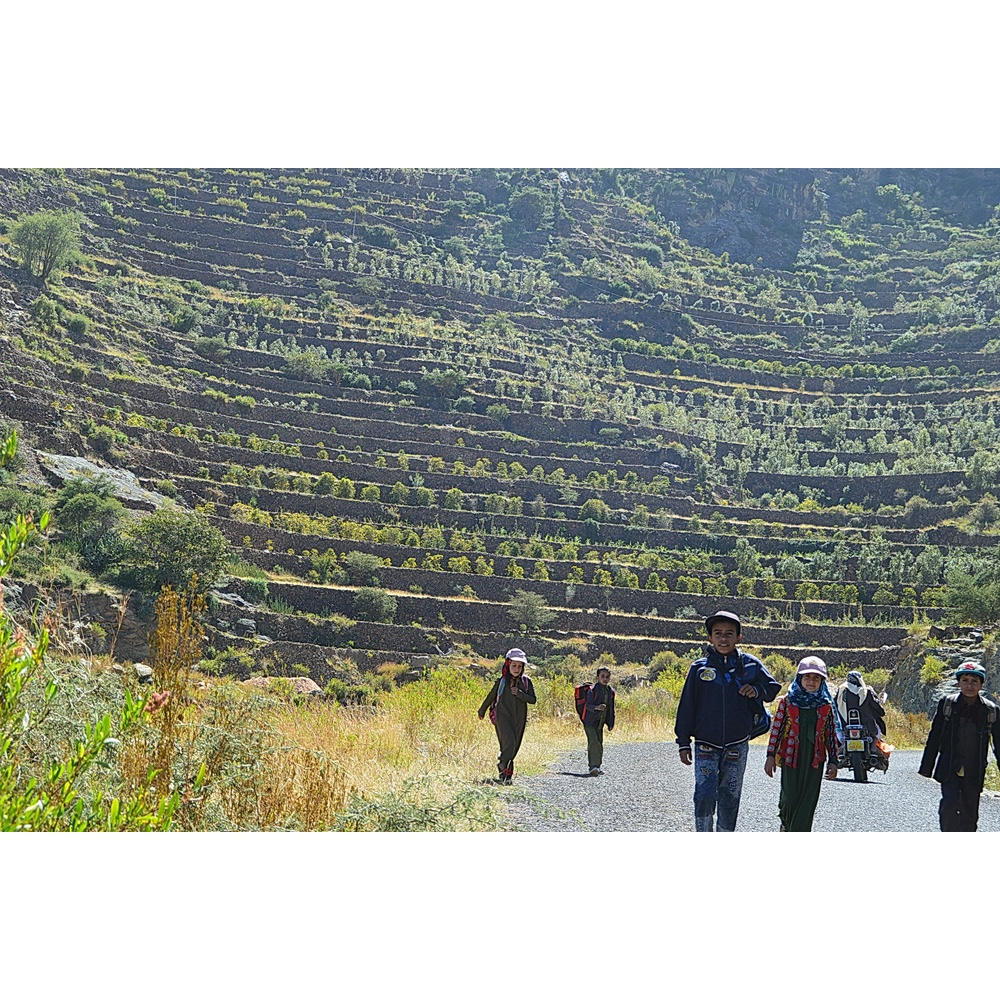 Coffee plantation on the far with kids walking in the street in Khulani Yemen