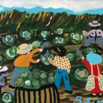 Bernice Sims, Harvesting Lettuce