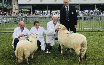 Royal Welsh Show 2019 Breed Champions