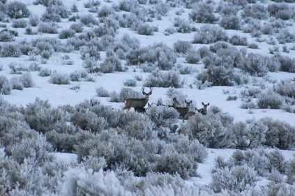 herd of deer on bush