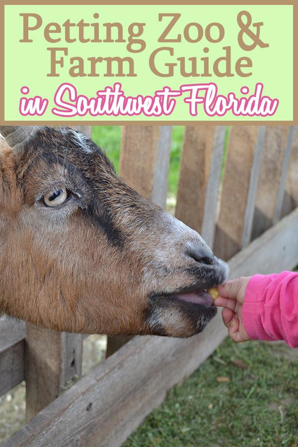 southwest florida petting zoo and farm guide mom explores