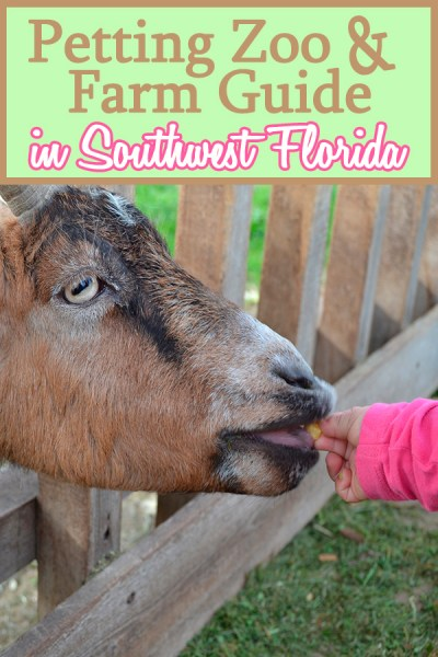 Southwest Florida Petting Zoo & Farm Guide