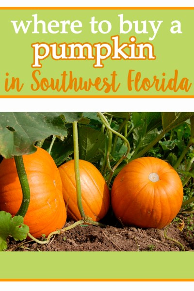 Where to buy a pumpkin in southwest Florida