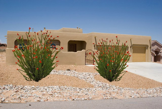 The Ocotillo Plant - Desert Landscaping