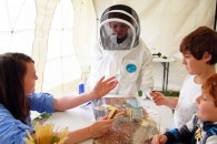 Exploration Station What's A Beekeepers Job