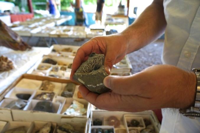 Fossils at the Golden Nugget Flea Market