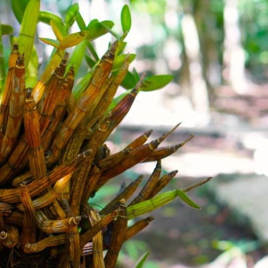 Photogenic jungle plants.