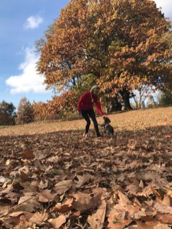 Leaf Peeping season, better if random dog runs into shot.