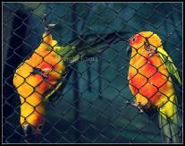 mysore_birds