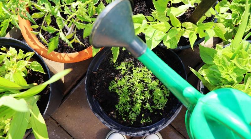 4 passos para cuidar de uma horta em um apartamento pequeno