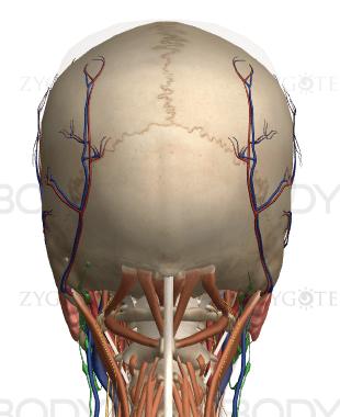 顎と解剖学3