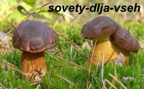 Полезные свойства грибов