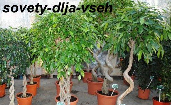 Тропические комнатные растения