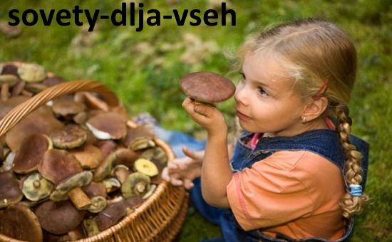 Отравление грибами: как избежать?