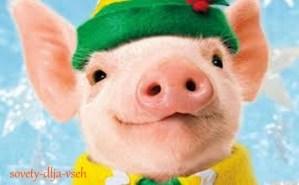 положительные качества желтой свиньи