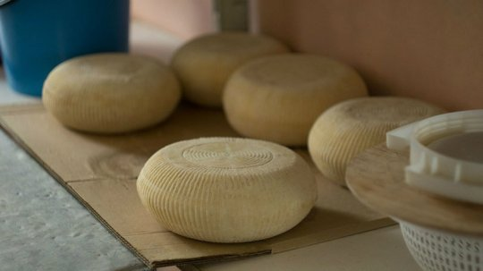 польза твердого сыра