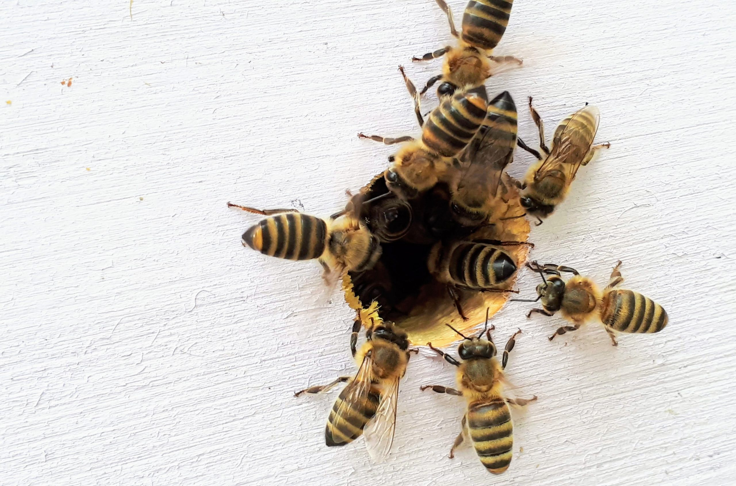 honey bees going in hive alabama