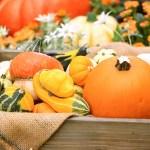 ハロウィンに飾るかぼちゃの種類