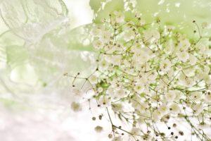 敬老の日の花でおすすめなのはカスミソウ