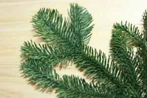 クリスマスに見かける葉っぱの名前はもみの木アップ