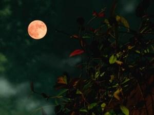 夏至の満月ストロベリームーンで恋愛が成就する?