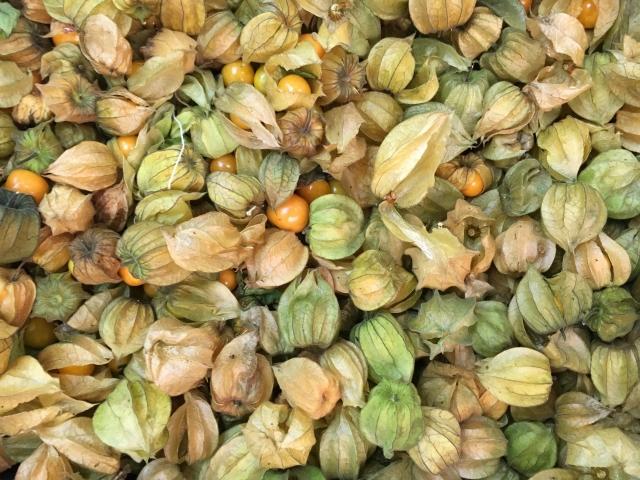 食用ほおずきの収穫と保存方法