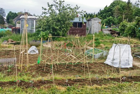 allotment 2015