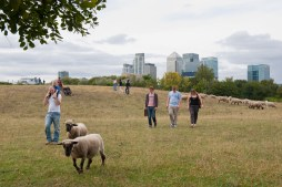 Mudchute Farm, Isle of Dogs, London. STRICTLY FRIENDS OF THE EARTH USE ONLY