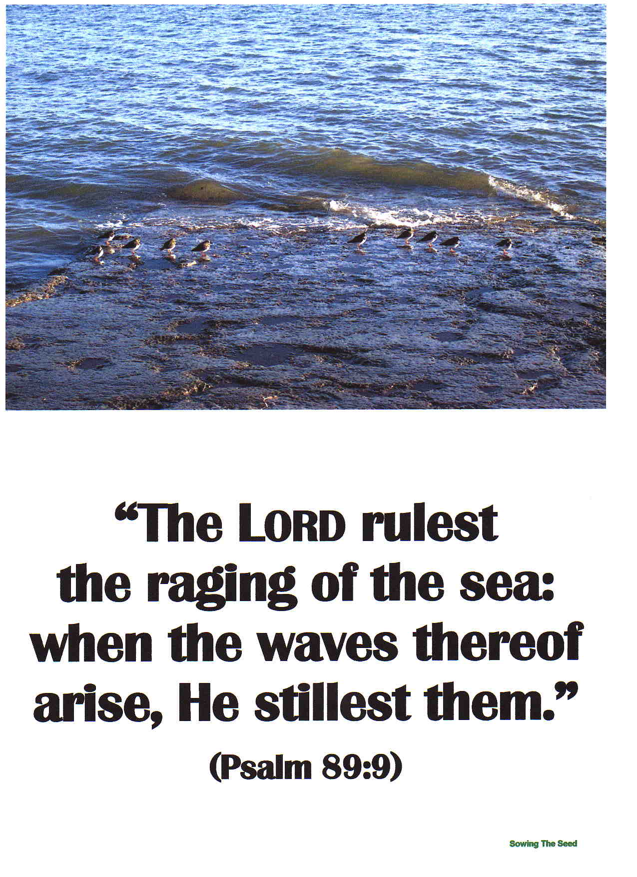 The Lord Rulest