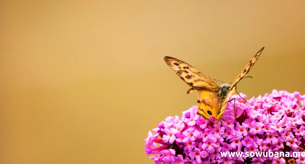 Moments of a butterfly