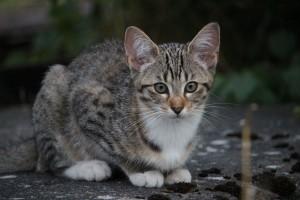 cat-896232_1280