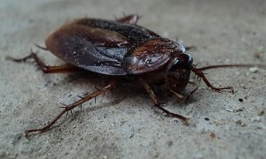 cockroach-70295_640