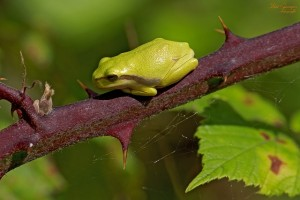 frog-191078_640