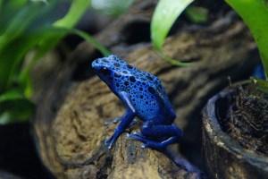 frog-284044_640