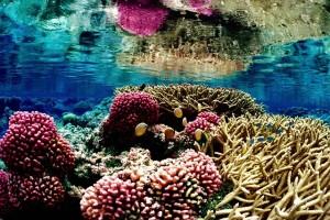 reef-386973_640