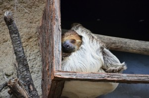 sloth-359217_640