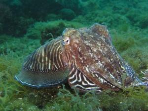 squid-225423_640