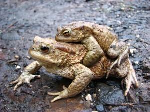 frog-370751_640