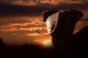 elephant-748288_640