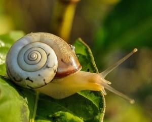 snail-405384_640