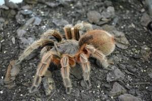 spider-1232384_640