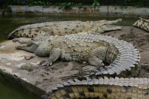 croc_inter