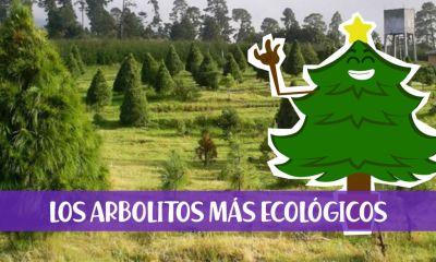 Lugares para comprar un árbol de navidad en maceta