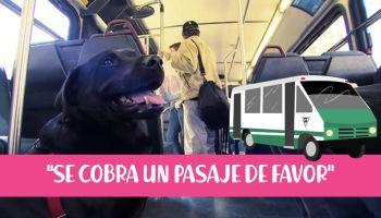 'Eclipse' la perrita que viaja sola en el autobús para ir de paseo