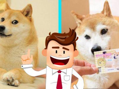 Lo que no sabias del perro mas famoso de los memes, o quiza perrita
