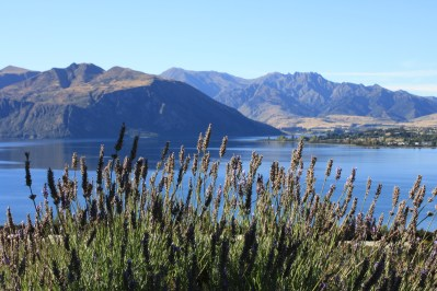 Lake Wanaka from Rippon Vineyard